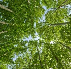 greentreetops